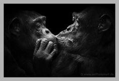 «Animals» by Wolf Ademeit