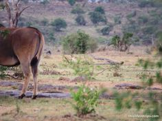 Africa got Back – My Safari BIG 5 Behinds - This Life in Trips