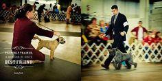 Dog Show on Behance