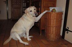 The pear beggar!