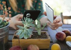 Nova Wireless Pocket Flash – give your low light phone photos a fighting chance