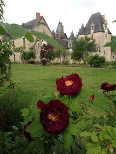 Les fleurs du château de Fougères-sur-Brièvre. #leCMN #FougeresSurBievre.