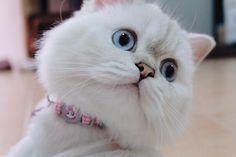 ซูมเก่ง 🙃 Salmon Cat, Cats, Animals, Instagram, Gatos, Animales, Kitty Cats, Animaux, Animal Memes