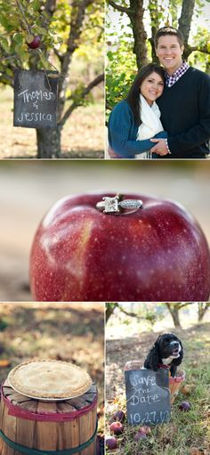 engagement pics at apple orchard / ring on apple detail shot.