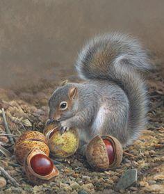 grey squirrel_edited.jpg (640×758)