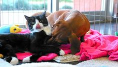 Ruth the 7-month-old kitten is so lucky to have a friend like Idgie the dachshund. Ruth is partially paralysed, and Idgie is her dedicated protector.