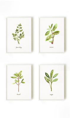 Kitchen art Herb watercolor painting Set of 8 herb by colorZen