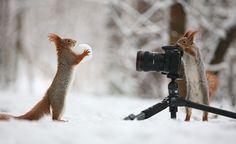 Diese Tiere lieben Schnee repinned by www.landfrauenverband-wh.de #landfrauen #landfrauen wü-ho
