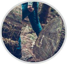 Baumschnitt, Baumfällung und Baum schneiden