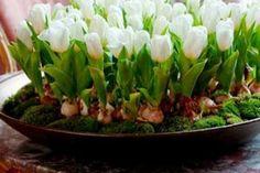 O picătură de iod și nu-ți vei recunoaște grădina! Acesta este un remediu împotriva fitoftorozei, mucegaiului alb și dăunătorilor. - Fasingur Watermelon Rind, Watermelon Recipes, Floral Centerpieces, Flower Arrangements, Centerpiece Ideas, Japanese Wine, Garden Deco, Cool Yoga Poses, Cactus