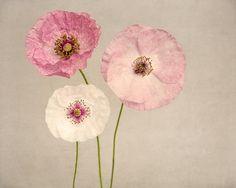 "Poppy Art, Fine Art Flower Photography Print """"Pink Poppies No. 2"""""