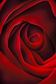 Rose by Georgia O'Keefe