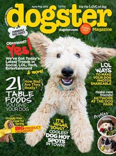 Some Helpful Ideas For Training Your Dog. Loving your dog does not mean you are willing to let him go hog wild on your possessions. That said, your dog doesn't feel the same way. This guide will gi Animal Magazines, News Magazines, Dog Backyard, Discount Magazines, Different Types Of Dogs, Bad Photos, Dog Health Care, Make New Friends, Training Your Dog