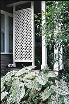 1000 images about outdoor privacy screens on pinterest for Lattice panel privacy screen