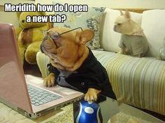French bulldog using computer...lol