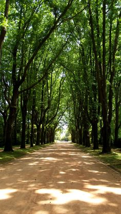 Serralves enjoy portugal cottages & manor houses Welcome to Porto http://www.enjoyportugal.eu/#!porto-and-north/c1yvw
