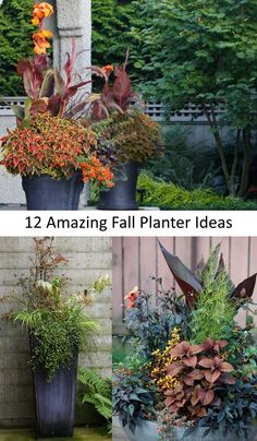 Organic Gardening Supplies Needed For Newbies 12 Amazing Fall Planter Ideas Garden Pics And Tips Buy Flowers Online, Buy Plants Online, Planter Ideas, Planter Pots, Planter Garden, Container Plants, Container Gardening, Online Flower Delivery, Fall Planters