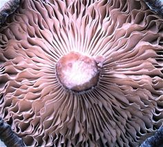FungusMushrooms More Pins Like This At FOSTERGINGER @ Pinterest