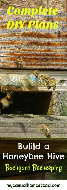 Complete DIY Honey Bee Hive Plans. Become a backyard beekeeper with these easy to use plans. Includes top bar hive plans and complete material list.