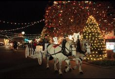 Christmas in my hometown...Forest City, NC