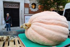 A woman looks towards a giant pumpkin entry for the RHS Heaviest Pumpkin competition, ahead of the RHS London Harvest Festival at Lindley Hall on October 3, 2016 in London, England. Grown by Ben Eliezer from Kent, the pumpkin weighed in at 566 kg (1,243 lbs).
