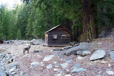 """So I bought a 140 acre gold mining claim in California's Siskiyou Mountains on Ebay because it said it had 5 cabins on it, then conned some friends into buying in to the operation, all site unseen."" (via cabinporn)"