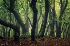 "Forest Love - Forest Love, the Netherlands.  <a href=""http://facebook.com/martinpodtphotography"">Facebook</a> | <a href=""https://www.instagram.com/martinpodt/"">Instagram</a> | <a href=""http://fineartamerica.com/profiles/martin-podt.html"">Fine Art America</a>"