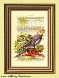 ROBB the COCKATIEL - Parrot - Parakeet - Dictionary art print -Vintage book page print recycled - Art Print Dictionary Vintage Art, Vintage World Maps, Dictionary Art, Cockatiel, Parakeet, Recycled Art, Antique Books, Bird Prints, Beautiful Birds