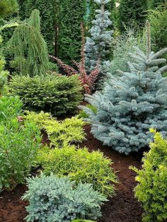 46 low maintenance small front yard landscaping ideas - All For Garden Evergreen Landscape, Front Garden Landscape, Small Front Yard Landscaping, Evergreen Garden, Privacy Landscaping, Low Maintenance Landscaping, Garden Landscaping, Landscaping Ideas, House Landscape