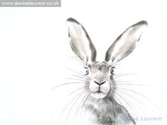 hare sketches | Peak A Boo Hare Sketch – Denise Laurent