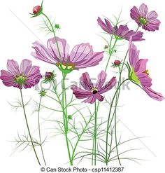 Cosmos is a genus, with the same common name of Cosmos, of about 20–26 species of flowering plants in the family Asteraceae. Description from imgarcade.com. I searched for this on bing.com/images