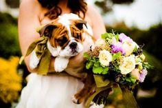 Puppy Wedding Photos!
