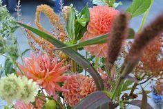 July/Orange Dahlias