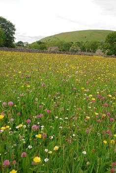 Hay meadows of Littondale. Best time of year to see them, mid June to mid July…