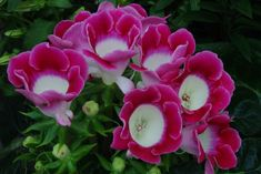 Images, Tropical, Rose, Plants, Searching, Pink, Roses, Flora, Plant