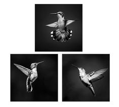 Hummingbird Prints Black and White Photo Set of 3 Prints | Etsy Insect Photography, Fine Art Photography, White Photography, Hummingbird Photos, Professional Photo Lab, White Prints, Nature Prints, Affordable Art, Wall Art Sets
