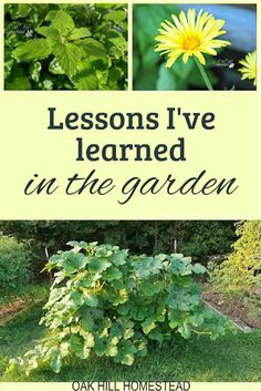 Lessons I've Learned in My Garden My Happy Place, Homesteading, Places, Garden, Lugares, Garten, Lawn And Garden, Gardening, Outdoor