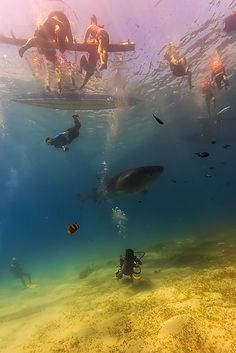 ocean, oceans, sea, seas, snorkel, snorkeling, dive, diving, underwater, water, island, islands, beach, beaches, tide, tides, ocean water, salt life, salty sea, swim, swimming, ocean swim, under the sea #snorkeling #diving #swimming