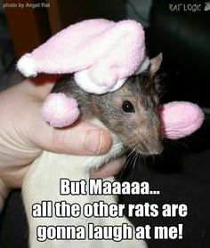 Mitten rattie.....What rats won't  do to make their mom's happy !