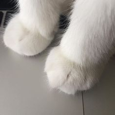 There is no doubt that cats are a popular choice for pets — in fact, in accordance with the American Veterinary Medical Association, more households in the U. have cats than dogs! Cat Aesthetic, White Aesthetic, Aesthetic Fashion, Cat Paws, Dog Cat, I Love Cats, Cute Cats, Baby Cats, Cute Baby Animals
