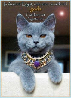Cats were Gods. Terry Pratchett Quote. #cat #humour #egypt THIS IS MY CLAUDE -- PROUD AND BEAUTIFUL