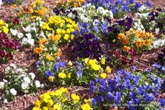 Flowerbed in front of the Capitol