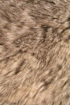 Animal Fur iPhone wallpaper