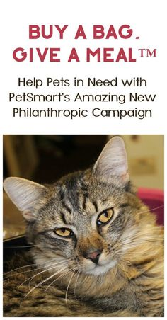 PetSmart celebrates 30 years with their biggest philanthropic campaign ever! Find out how you can help animals in need with Buy a Bag, Give a Meal™️  #ad