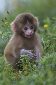 In The Grassland Primates Cute Wild Anim. - -You can find Primates and more on our website.In The Grassland Primates Cute Wild Anim. Cute Wild Animals, Cute Funny Animals, Animals And Pets, Primates, Beautiful Creatures, Animals Beautiful, Types Of Monkeys, Cute Baby Monkey, Snow Monkey