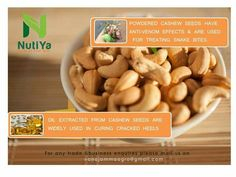 #Cashew oil Extracted from #cashew #seeds are widely used in curing cracked Heels in many countries.  Also Powdered #CashewSeeds have Anti-Venom Effect & used for treating snake #bites.  #Nutiya #Foods #Vanajamaagro #MakeInIndia #GstForNewIndia #GSTeffect #HealthBenefits #SwasthaBharat