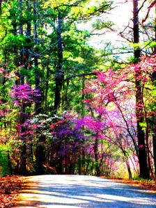 Davey Dogwood Park - Palestine, Texas