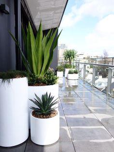 Darlinghurst Rooftop 2
