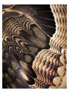 Milk Store — Natural Beauty by James Houston - Moth Moth Wings, Insect Wings, Insect Art, Butterflies Flying, Beautiful Butterflies, Butterfly Kisses, Butterfly Wings, Patterns In Nature, Textures Patterns