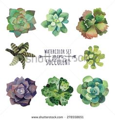 Vector set of floral elements in a watercolor style. Succulents painted in watercolor. Elements for design of invitations, movie posters, fabrics and other objects. Set #3 - stock vector